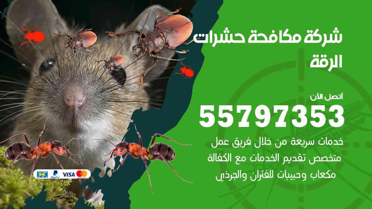 شركة مكافحة حشرات وقوارض الرقة / 50050647 / رش الصراصيروالبق والفئران